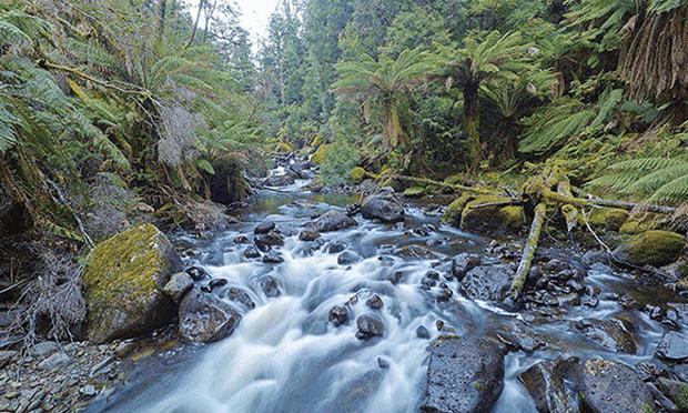 Wilderness rainforest in the southern Tarkine