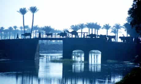 Cattle and camels cross a bridge over the river Nile in Egypt
