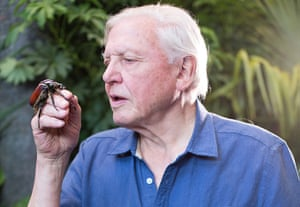 Micro Monsters: David Attenborough with a Goliath Beetle