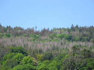Week in Wildlife: Larch trees to be cleared