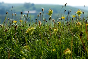 Week in Wildlife: A wildflower meadow at Priestcliffe Lees