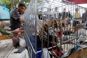 Week in Wildlife: caged animals during a raid on the outskirts of Bangkok