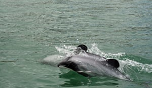 Week in Wildlife: TO GO WITH NZealand-conservation-nature-