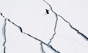 Penguin on Antarctic sea ice