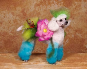 Colourful dogs: Crazy Dog Grooming Competition