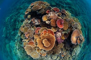 Great Barrier Reef: Hard corals vie for space and energy-giving sunlight off Cairns