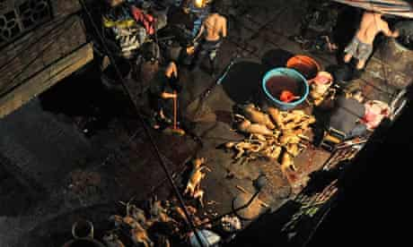 Dog meat being prepared for sale in Yulin, Guangxi province