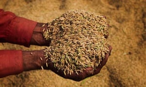 Expand your rice repertoire | Food | The Guardian