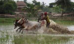 Now for some racing of a different kind: Indian jockeys take part in the annual bull race at Al Takhali village, south of Kolkata. The traditional race in muddy rice fields is organised by farmers to celebrate a good harvest season.