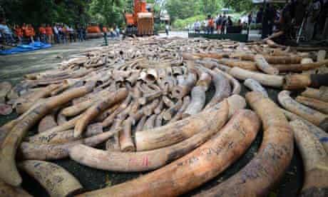 Philippines destroys five tonnes of elephant tusks