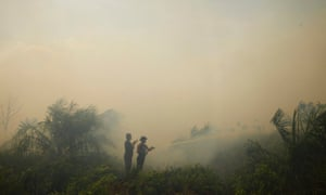 Firefighters spray water to burning palm oil trees in haze hit Dumai, in Indonesia. Hospitals in Dumai have recorded increases in cases of asthma, lung, eye and skin problems and free face masks were being distributed and authorities advised residents to stay indoors with their windows shut.