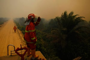 Singapore smog: A firefighter looks at burnt palm oil trees in a haze Dumai, Riau province