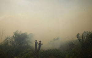 20 Photos: Firefighters tackle burning palm oil trees in Indonesia's Riau province