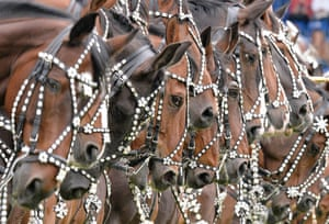 Well trained Danish horses stand in a row during the opening ceremony of the CHIO Equestrian Festival in Aachen.