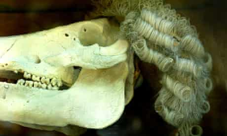 Barrister's wig on an animal's skull