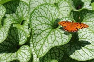 Week in Wildlife: A Gulf Fritillary butterfly