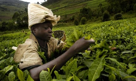 (FILES) A young tea picker works 15 Marc
