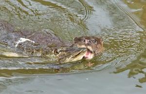 Week in wildlife: Otter Vs Pike