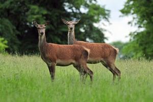 Week in wildlife: Summer weather June 25