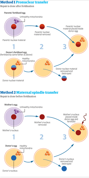 Mitochondrial transfer