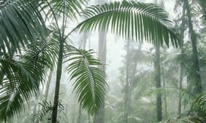 A report says there is public confusion over the offsetting of carbon emissions by carbon 'sinks' such as forests