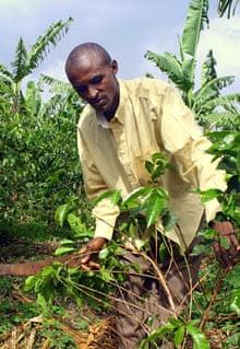 Rwanda's Luis Ntiricakeza tending to his farm in Sakara Village, Eastern Rwanda