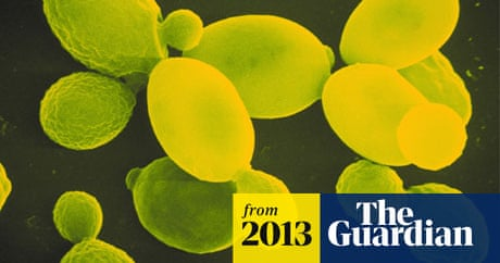 UK joins project to create synthetic organism from scratch