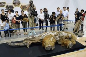 20 Photos: A 39,000 year-old female baby woolly mammoth named Yuka