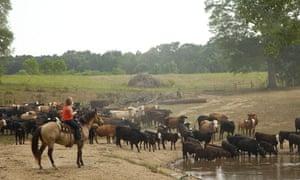 Kent Farm Amelia Kent