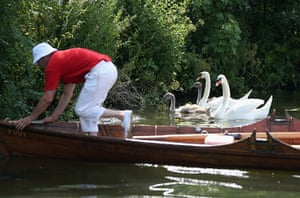 Swan upping in pictures: Swan upping in pictures