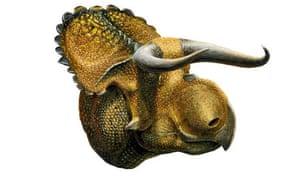 A life restoration of the dinosaur Nasutoceratos titusi.