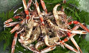 Grilled langoustines, rosemary butter