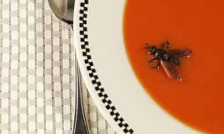Fly in soup