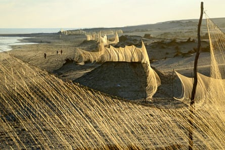 A line of nets erected along coastal dunes to catch migrating Common Quail (Coturnix coturnix) along the Egyptian Mediterranean seashore, autumn 2012. Photo by Holger Schulz/NABU