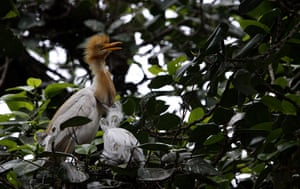 Week in Wildlife: bhubaneswar egret