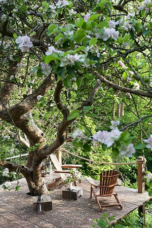 Homes - Bristol House - Decking with blossom