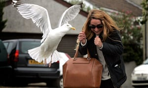 Ouch! A woman is attacked by a seagull on Liskey Hill Crescent in Perranporth, Cornwall.