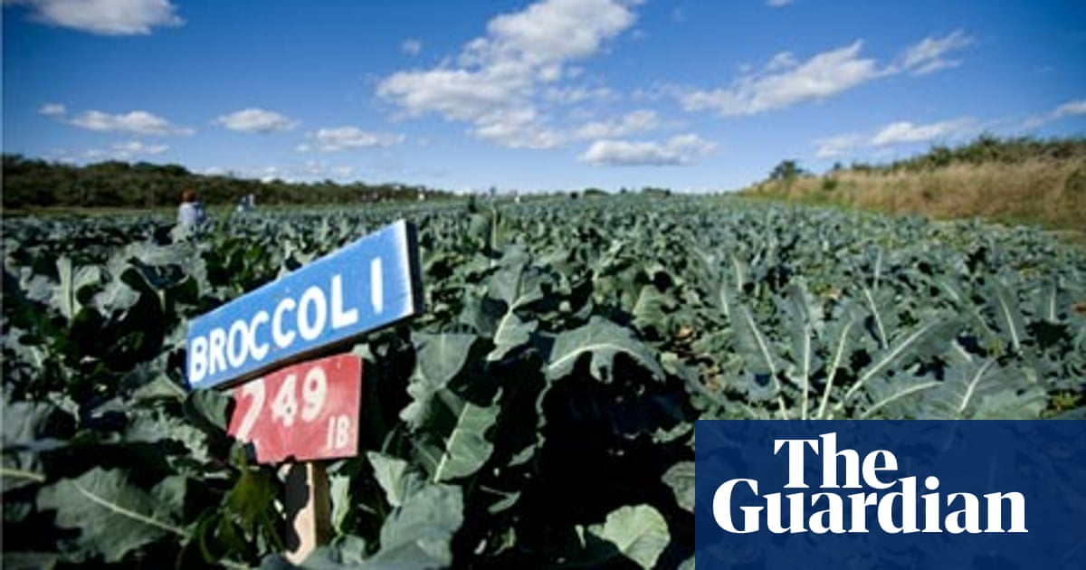 Why We Should All Be Eating More Broccoli Food The Guardian