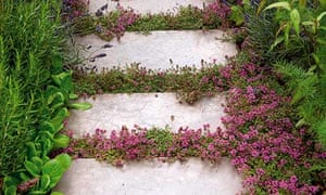 Gardens: plants for cracks | Life and style | The Guardian