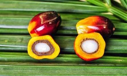 palm oil fruit genome