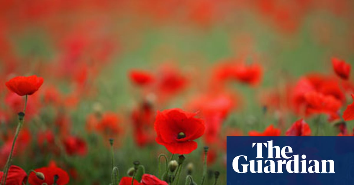 Plantwatch Wild Poppies Come Out In A Blaze Of Glory Science