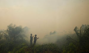Firefighters spray water to burning palm oil trees