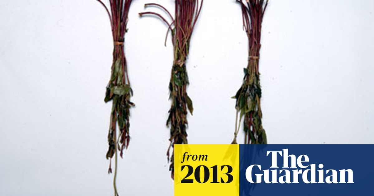 Theresa May ignores experts and bans use of qat | Politics