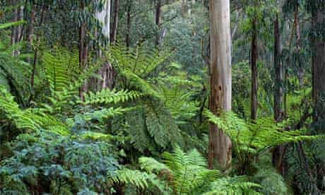 Errinundra Plateau, East Gippsland