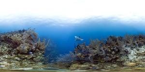 Catlin Seaview Survey: Caribbean Launch
