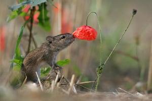 WildPhotos 2013 Speakers: A striped field mouse by Grzegorz Lesniewski