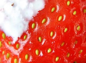 Close up Wimbledon: A single strawberry with cream