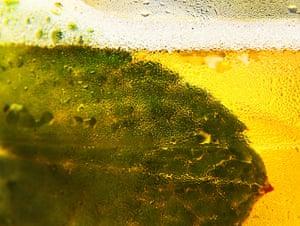 Close up Wimbledon: A mint leaf in a Pimm's drink