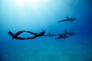 Free diving: Free diving with dolphins in Hawaii