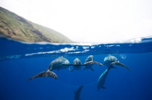 Free diving: Dolphins in Hawaii